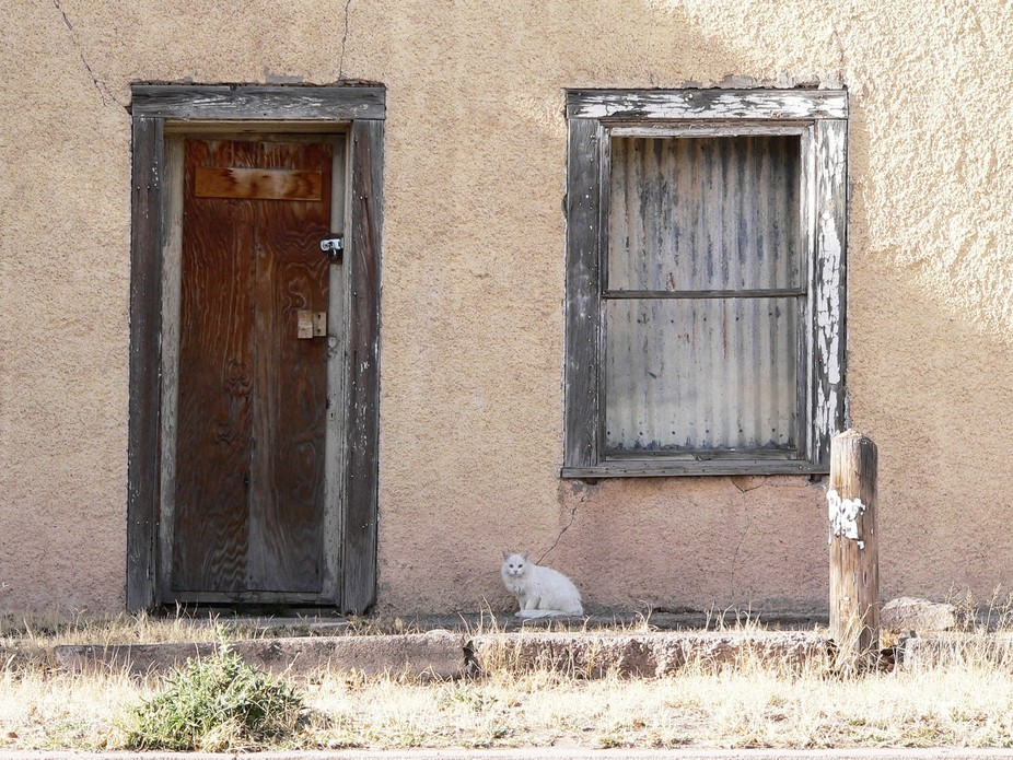Strange fact: Marfa, Texas has a large feral cat population. City efforts to trap, neuter/spay, a...