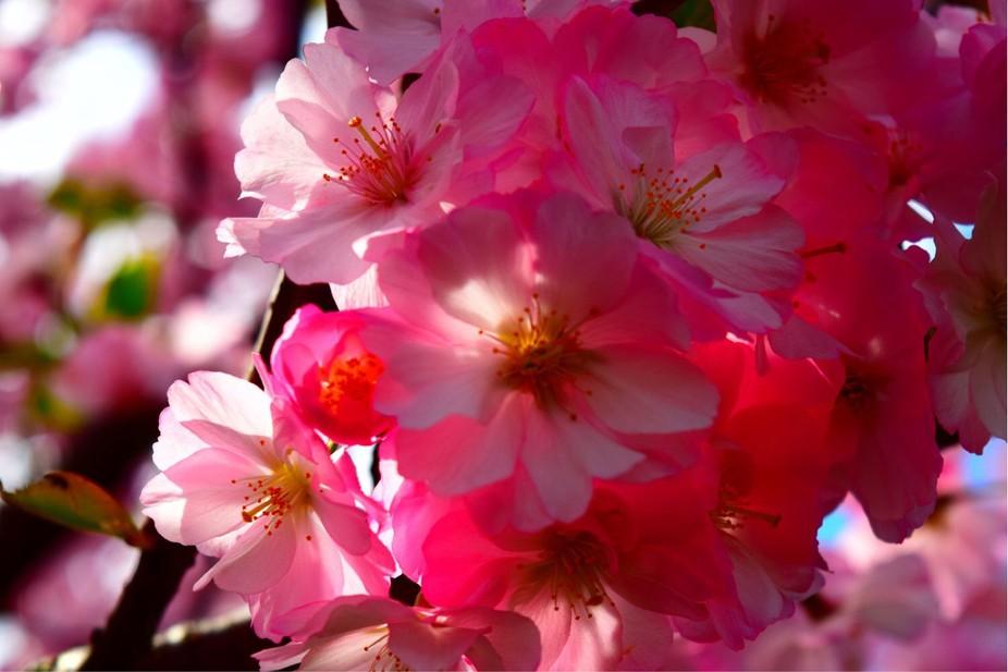 D3300, Nikon, Colors, Blooms, Flowers
