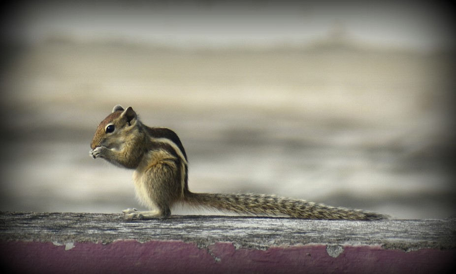my new capture...cute squirrel