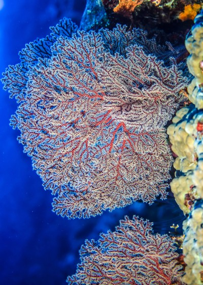 Colours of corals