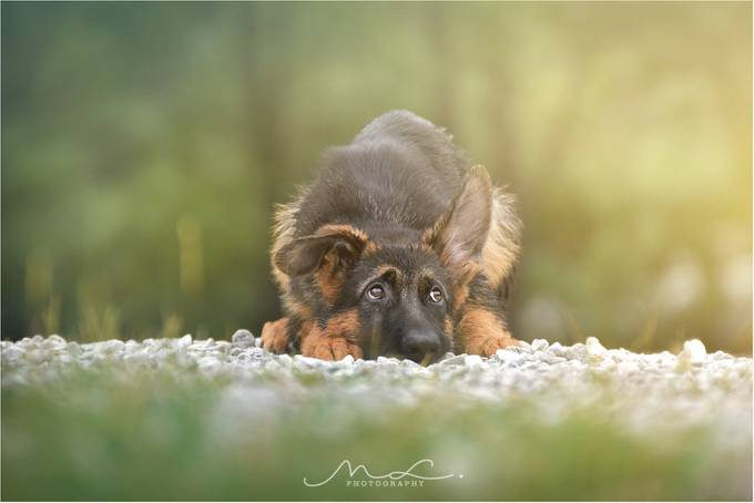 """I'm a good Boy"" by majalesar - Kittens vs Puppies Photo Contest"