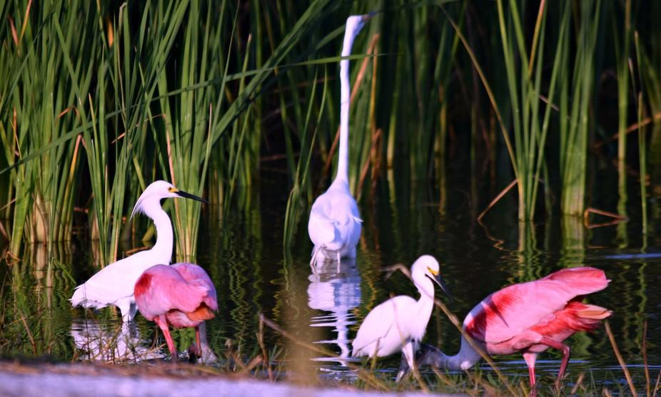 Beautiful florida birds