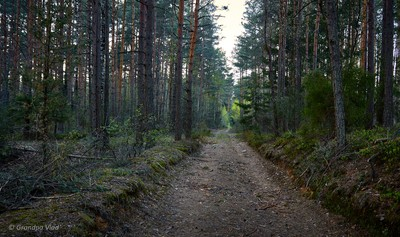 forest track...(1)