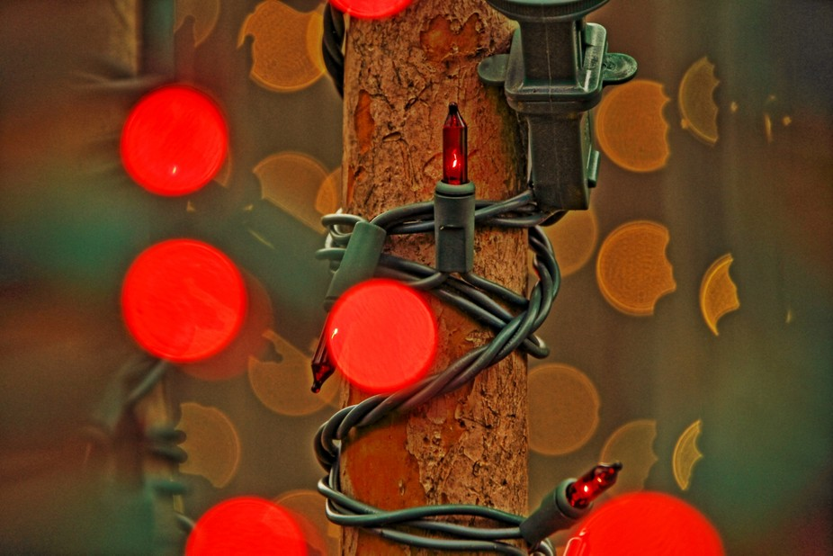 Christmas lights wrapped around trees.