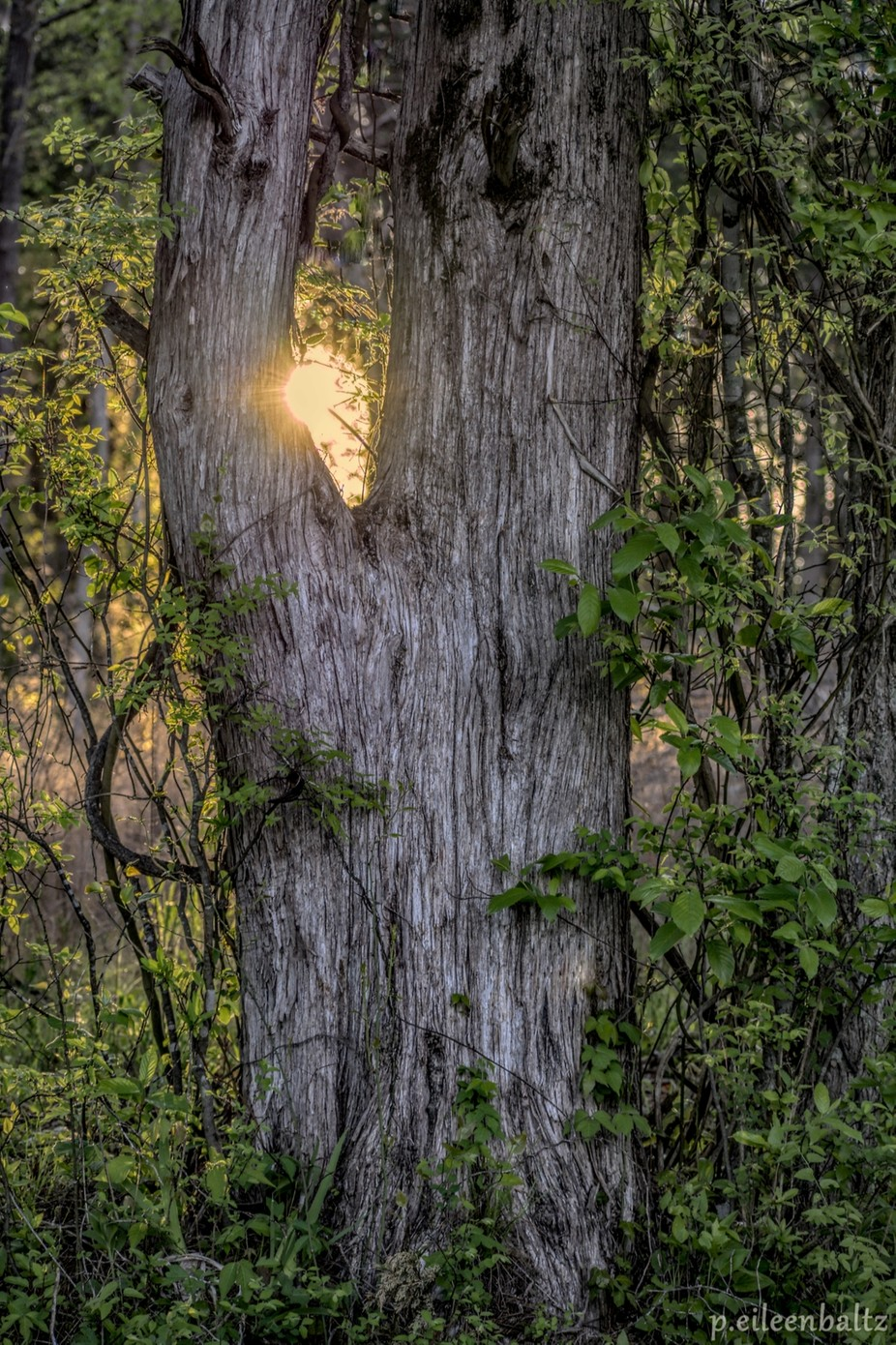Hide-and-Seek Sun by p_eileenbaltz - Stillness Photo Contest