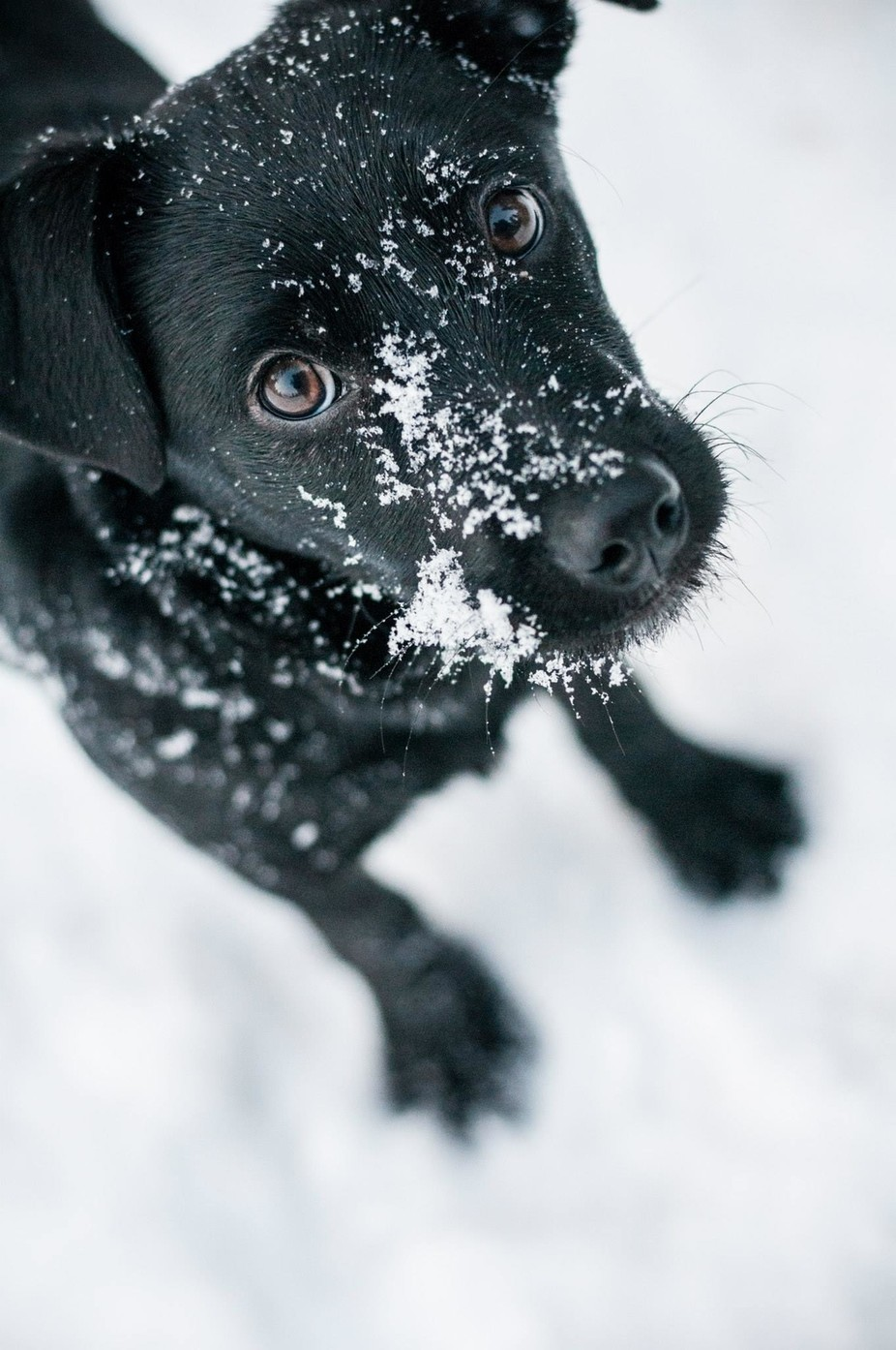 Puppers in Snow by ElishaIsabelle - Image Of The Month Photo Contest Vol 33