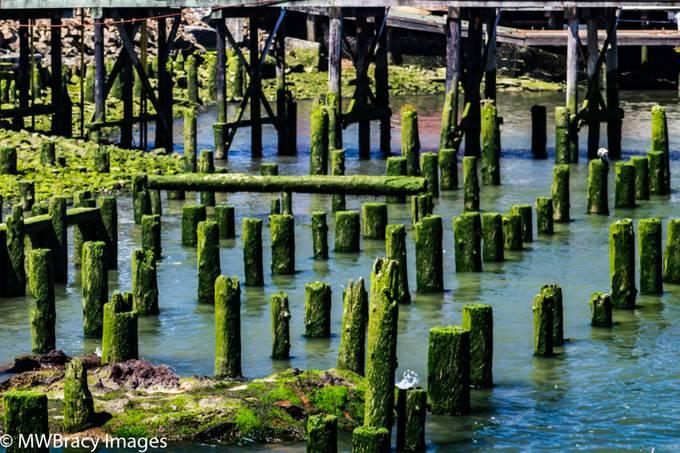Mossy posts