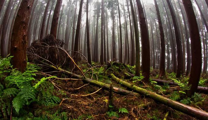 Fallen by Mac177 - Fallen Trees Photo Contest
