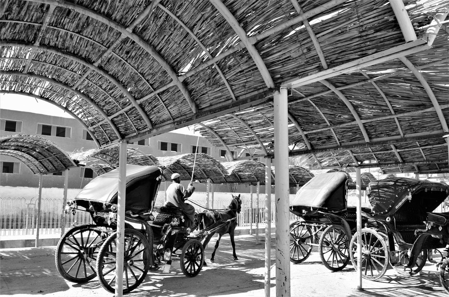 Driver and Horse and Carriage under Shelter, Egypt in Black and White