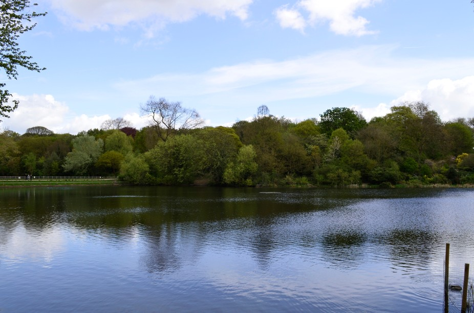 One of the many ponds on hampstead heath  in london
