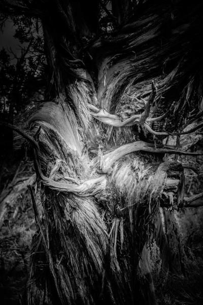 A Tree's Soul