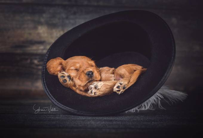 sleeping by sabrinawob - Kittens vs Puppies Photo Contest