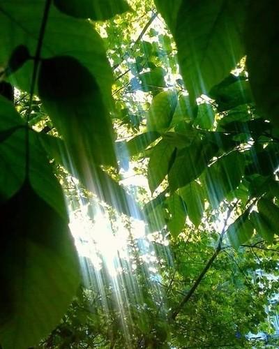 Divine rays of sun