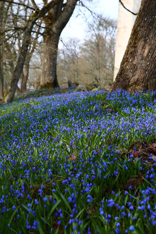 Blue Estonian spring