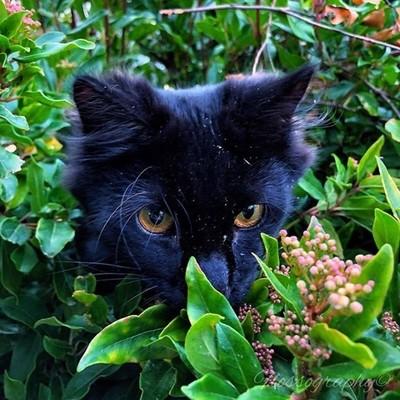 When your house cat becomes a bush cat! #blackcatsofinstagram #bushcats #outside #greenbush #Hey_ihadtosnapthat #discovertasmania #tasmaniagram #hobartandbeyond #instatassie #tassiepics #tassie #hobart #southerntasmania  #tassiestyle #tasmaniadotcom #aust
