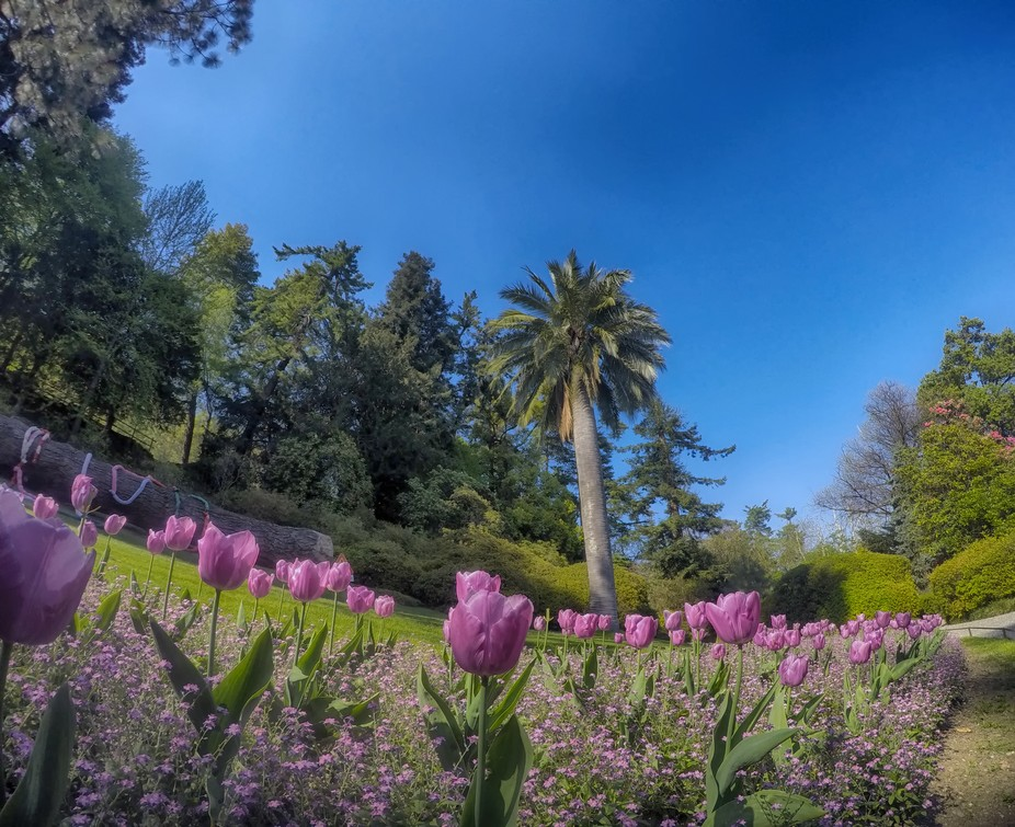 Villa Carlotta Garden; i wanto to share with you that relaxing view, make me feel so happy and I ...
