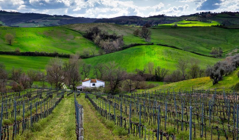 Tuscan Hills I