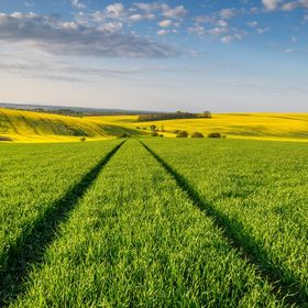 The beautiful fields of Southern Moravia, Czech Republic.