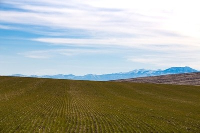 Green field with Owyhee Mountains in distance