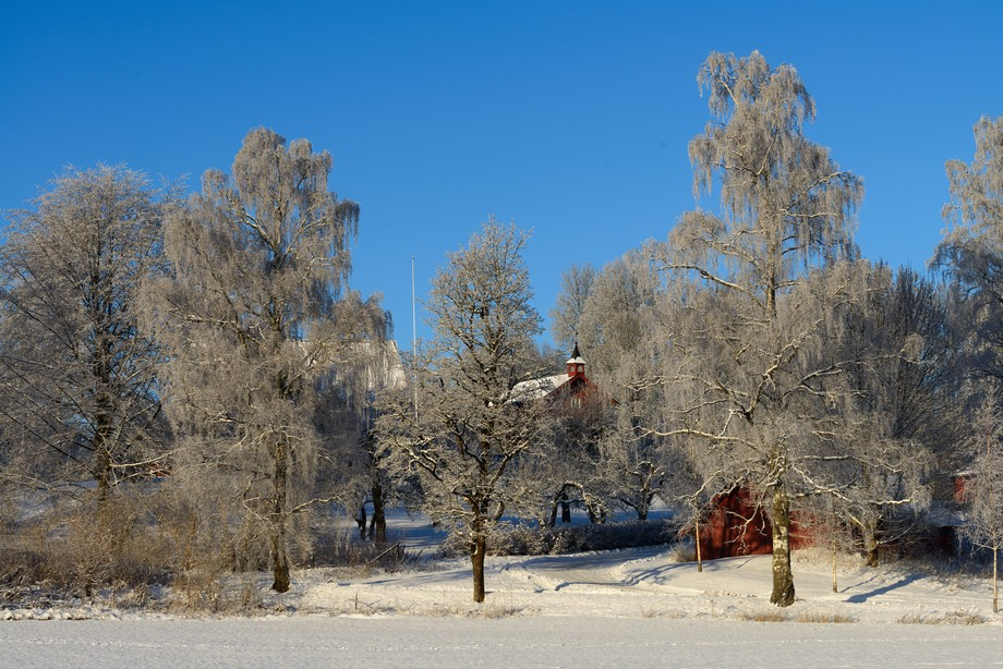 A classic Norwegian barn peeps out between these ice covered trees in a mid December shot