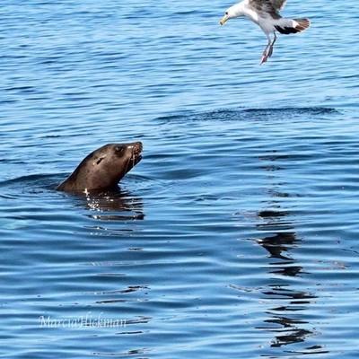 """Hello, Friend!"" #seal #california #cali #montereybay #mosslanding #seagull #sealion #californiaadventure ##whalewatching #wildlife #wildlifephotography #wildlifeplanet #animalsco #animalkingdom #animalphotography #animalplanet #wonderful_places"