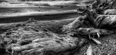 A stump at Stump Pass Beach.