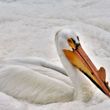 Pelican in Clemenson Rapids looked like it was enjoying a bubble bath! Nikon D3400 Lightdow 420-800 lens