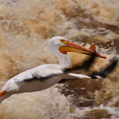 Looked like it was diving in rather than flying over the rapids! Nikon D3400 shot in raw and edited