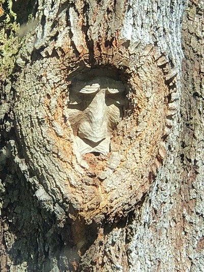 Its called a tree spirit. A local man from St Simons carved faces and different stuff into trees.
