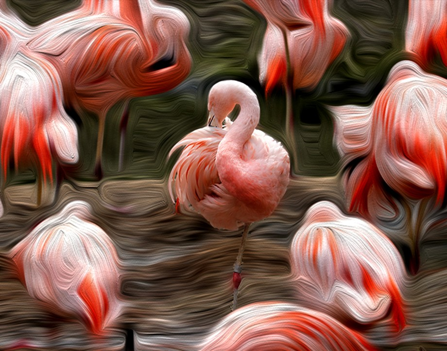 Flamingo Focus