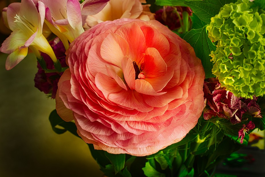 A Study in petals