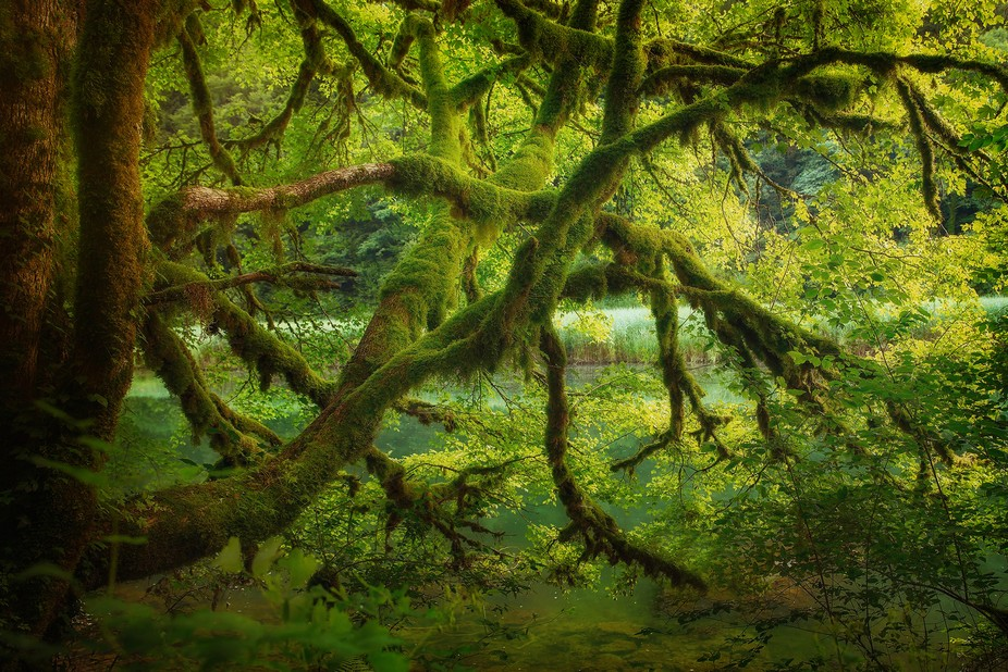 a beautiful river at the frontier between France and Switzerland. Old trees full of moss make the...
