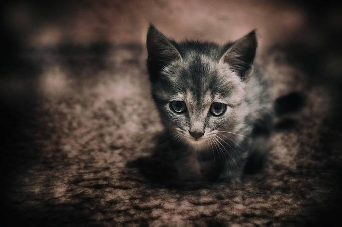 My sweet kitten by teodorasarbinska - Kittens vs Puppies Photo Contest
