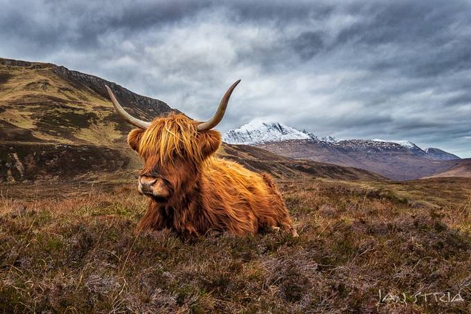 Scottish friend by janstria - Image Of The Month Photo Contest Vol 33