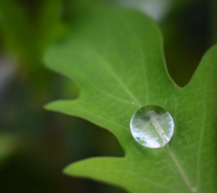 Raindrop Marble on Leaf
