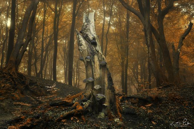 Old guy by martinpodt - The Natural Planet Photo Contest