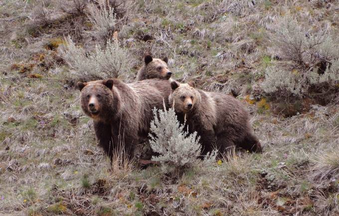 I watched these bears for over two hours, and it was awesome!