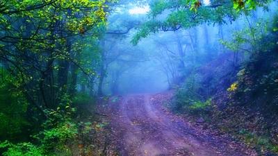 Mystical road.