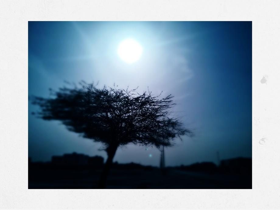 blue tree 2