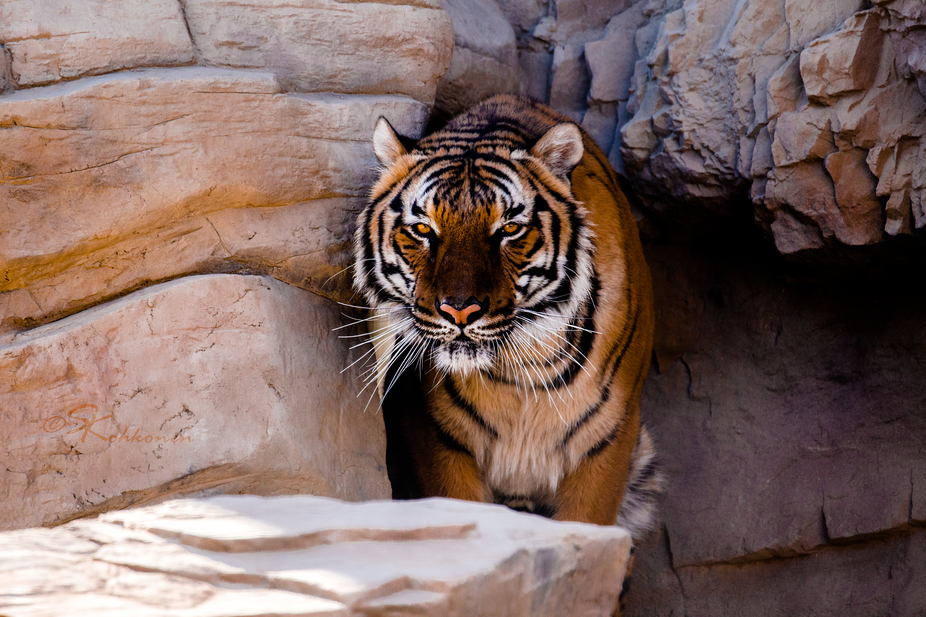 The Cat House, also known as The Exotic Feline Breeding Compound is an awesome exotic cat sanctua...