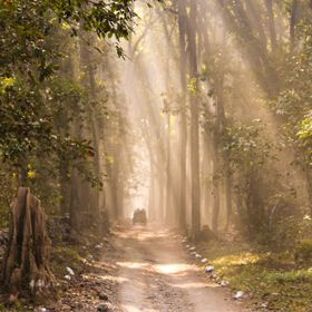 Jim Corbett National Park is a forested wildlife sanctuary in northern India's Uttarakhand State. Rich in flora and fauna, it's known for its...