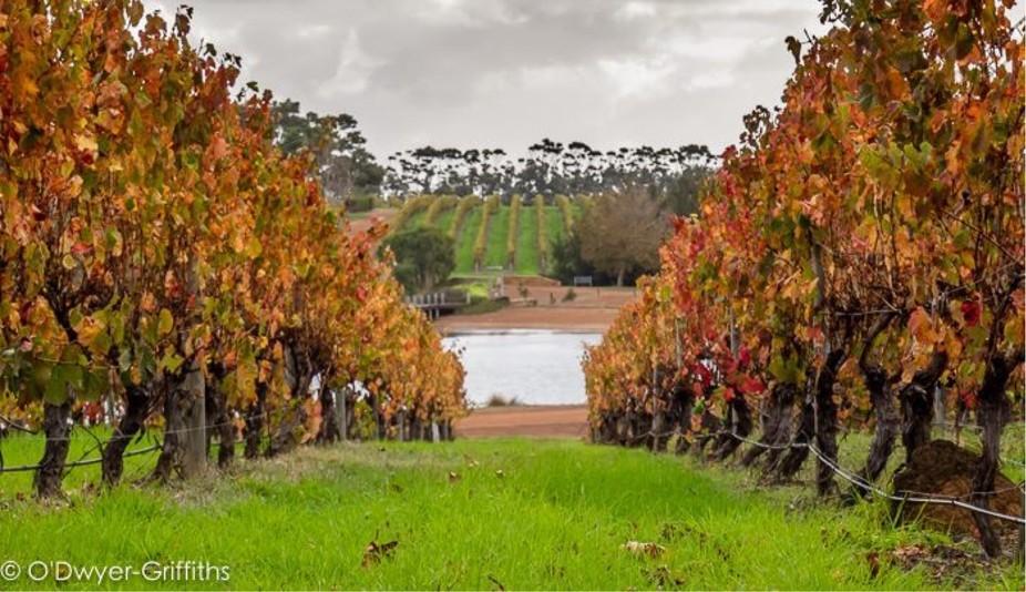 Vineyards of WA