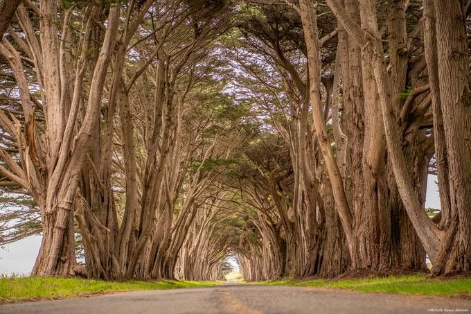 Tree Tunnel by swoop113 - Tall Trees Photo Contest