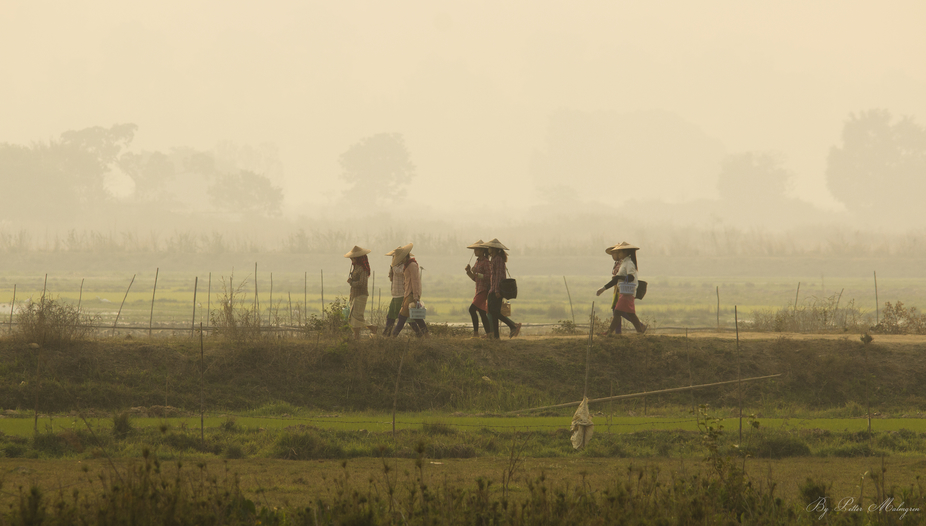 Girls/women going off to work the rice fields a foggy morning. Shan State, Myanmar.