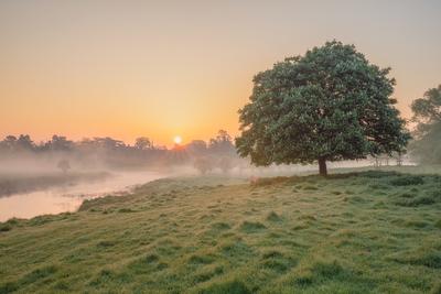 Halcyon Mornings