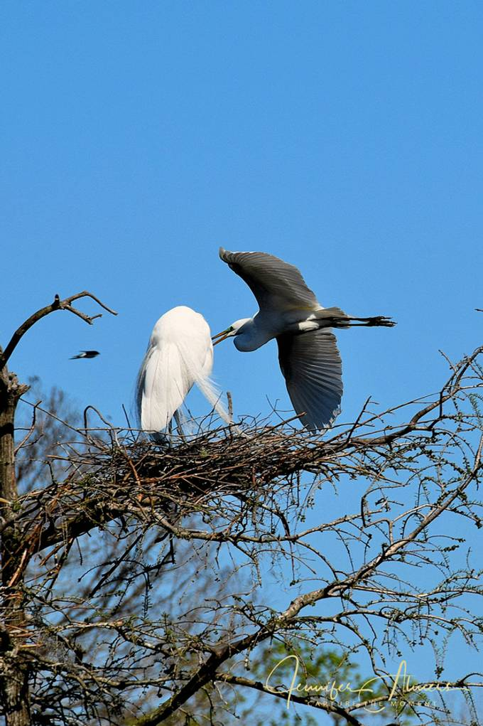 Coming into the Nest