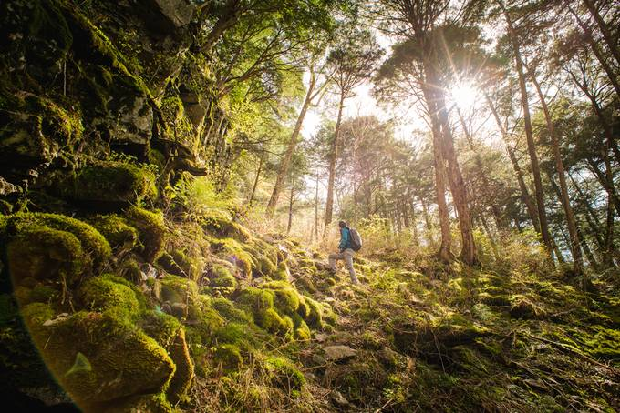 Japanese Forest by MatthewKou - The Magic Of Japan Photo Contest