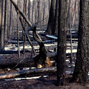 """The Elephant Hill Wildfire is the largest in B C""""s History. Spreading from Ashcroft to Sheridan Lake and East to Vidette Lake and west to near Pavillion."""