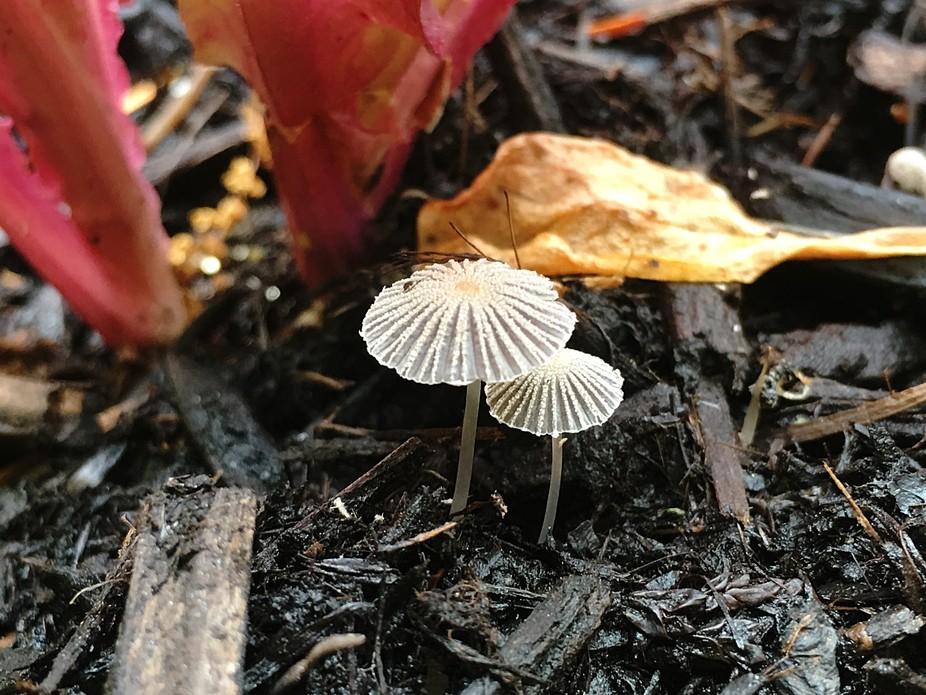 Miniture mushrooms
