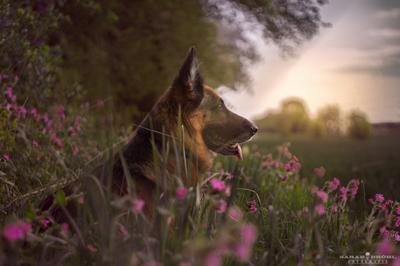 Cora enjoying the Sunset